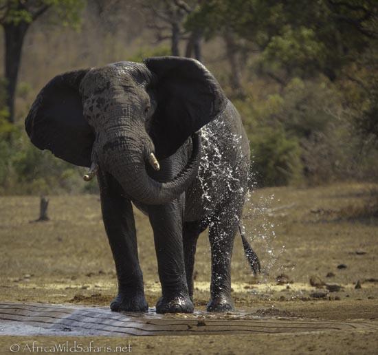 photo safari group-1-2