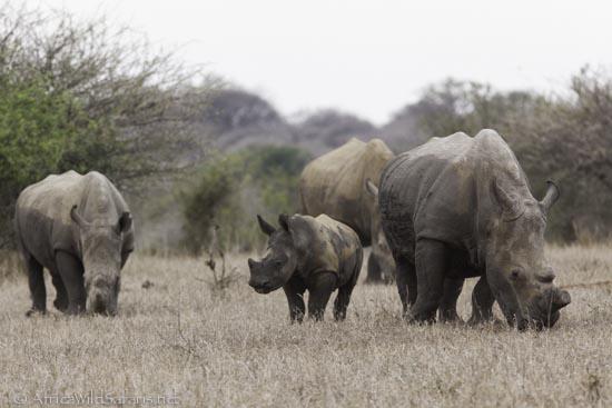 photo safari group-3