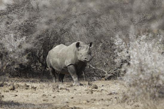 photo safari group-4