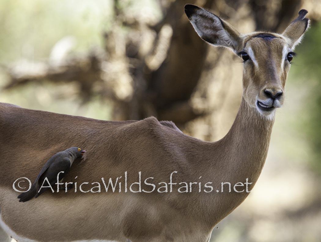 African birds photography