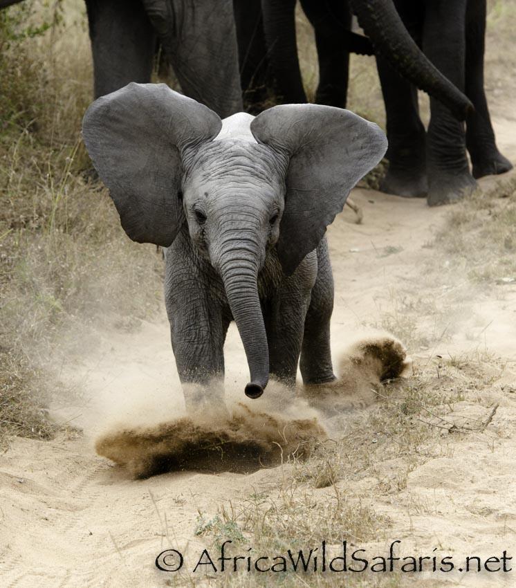 baby elephant in Sabi Sands