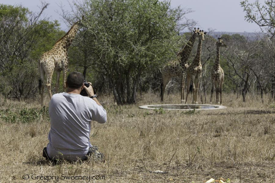 guests photographing giraffes at our watering hole