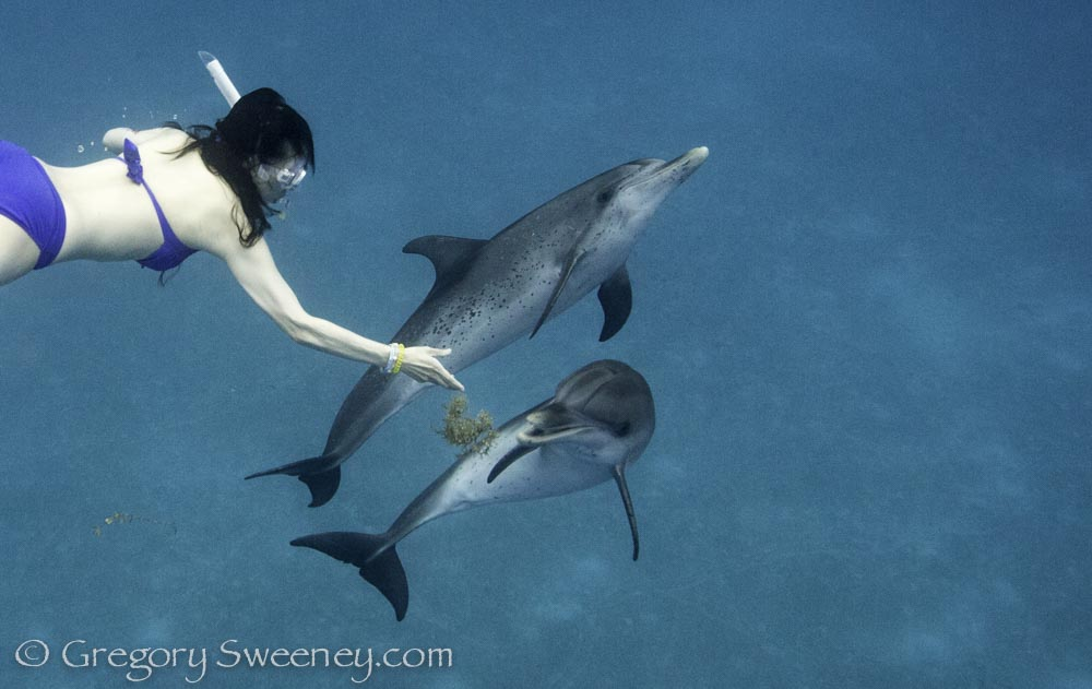 play with wild dolphins