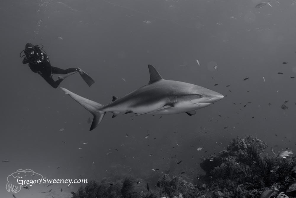 Shark image in Photoshop