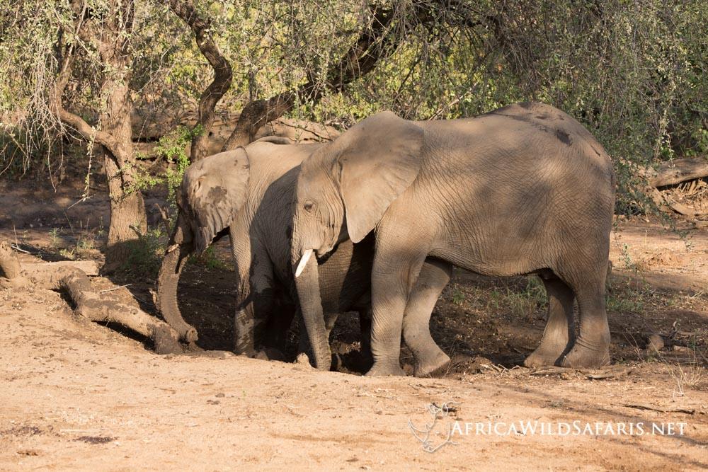 south africa photo safari seeing elephants
