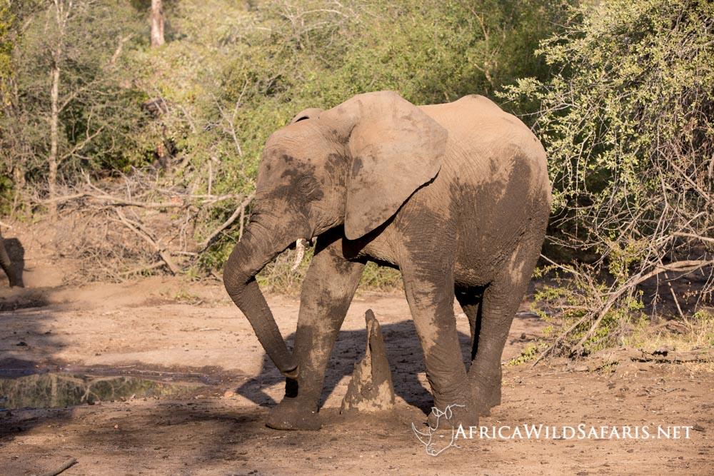 photo safari photographing elephants