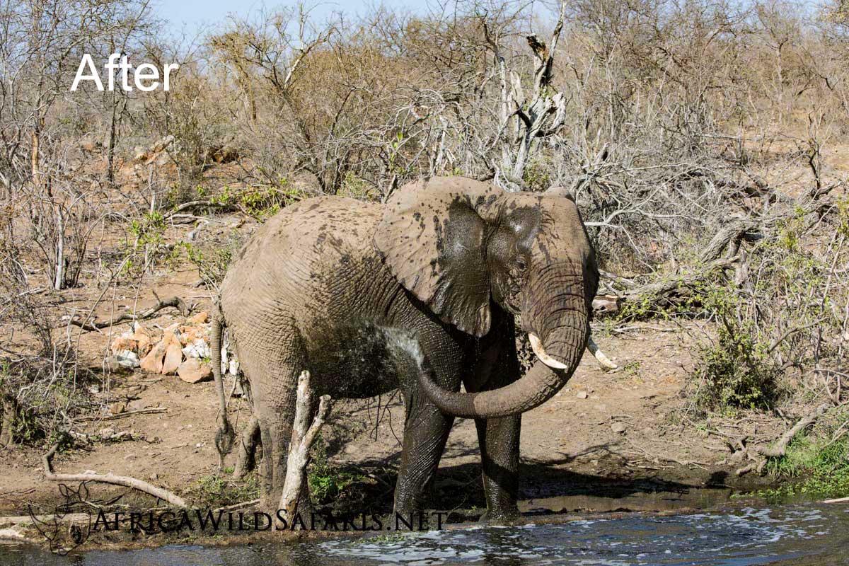 elephant image adjusted