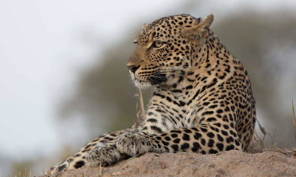 Africa Wild Safaris Blog