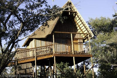 the Treehouse game  lodge  on a private reserve
